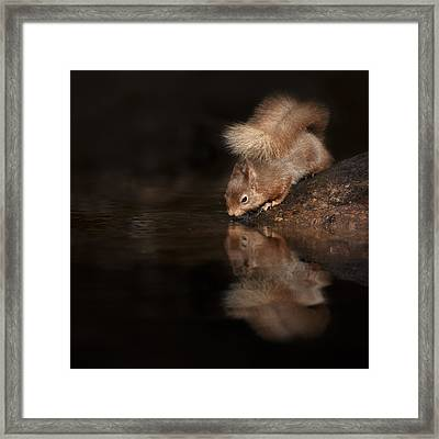 Red Squirrel Reflection Framed Print