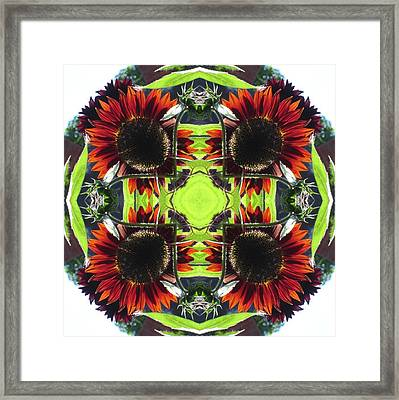 Red Sunflowers And Leaf Framed Print