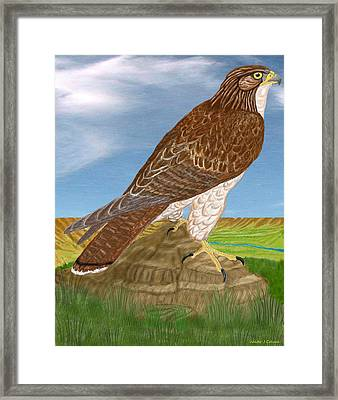 Framed Print featuring the digital art Red Tail Hawk by Walter Colvin