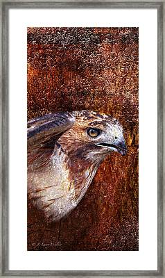 Red-tailed Hawk Framed Print by J Larry Walker
