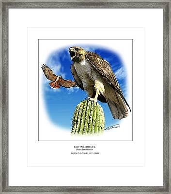 Red Tailed Hawk Framed Print by Owen Bell