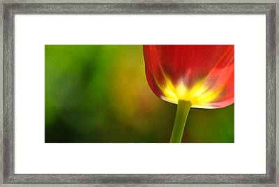 Framed Print featuring the photograph Red Tulip 2 by Ronda Broatch