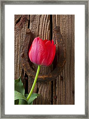 Red Tulip And Horseshoe  Framed Print by Garry Gay