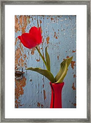 Red Tulip Bending Framed Print by Garry Gay