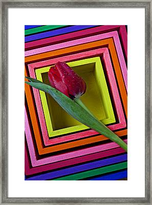 Red Tulip In Box Framed Print by Garry Gay
