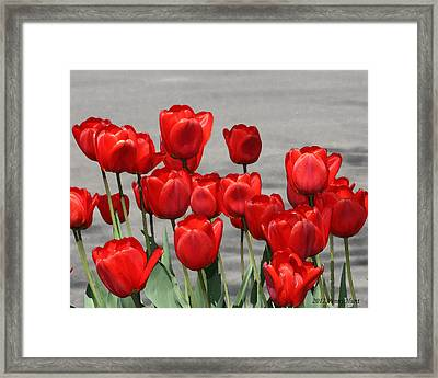 Framed Print featuring the photograph Red Tulips Welcome Spring by Penny Hunt