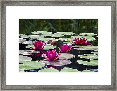 Red Water Lillies Framed Print by Bill Cannon