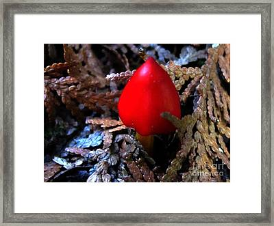 Red Wax Cap Framed Print