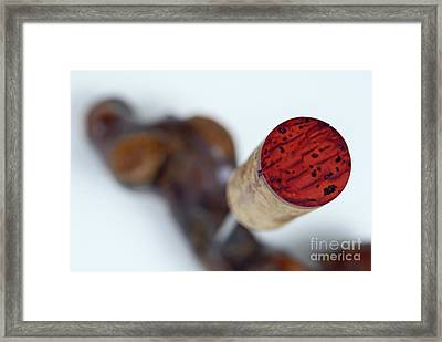 Red Wine Cork On Corkscrew Framed Print by Sami Sarkis