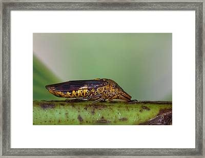 Red Winged Bug Framed Print by Craig Lapsley