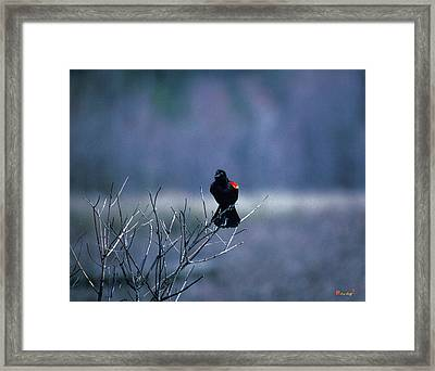 Framed Print featuring the photograph Red-wings Morning Call 10o by Gerry Gantt