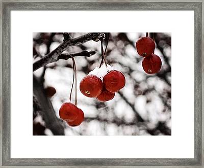 Red Winter Berries Framed Print
