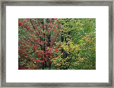 Red Yellow And Green Leaves Framed Print