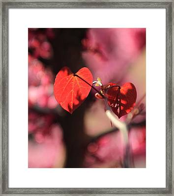 Framed Print featuring the photograph Redbud In Spring by Scott Rackers