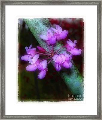 Redbud Framed Print by Judi Bagwell