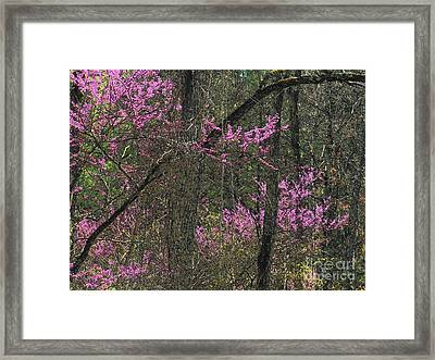 Redbuds In The Woods Framed Print by Joyce Kimble Smith