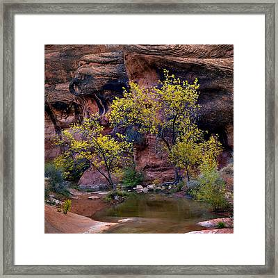 Sacred Tree Framed Print