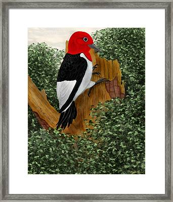 Framed Print featuring the painting Redhead Woodpecker by Walter Colvin