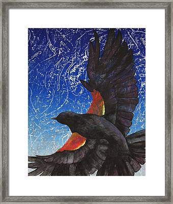 Redwing Framed Print by Sara Bell
