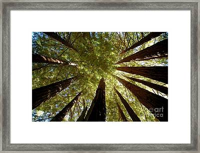 Framed Print featuring the photograph Redwood Canopy by Johanne Peale