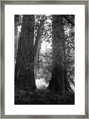 Redwood Pair Framed Print