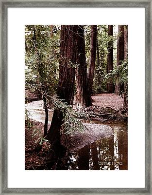 Redwood Stream Reflections Framed Print by Laura Iverson