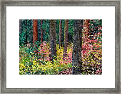Redwoods And Dogwoods Framed Print by Tim Fleming