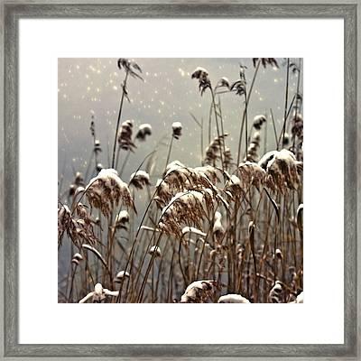 Reed In Snow Framed Print by Joana Kruse