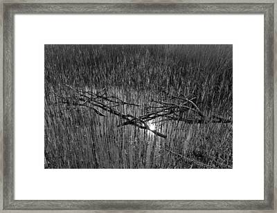 Reeds And Tree Branches Framed Print by David Pyatt
