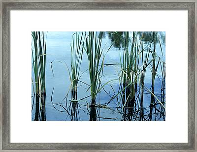 Reeds In The Water Framed Print by John Brink