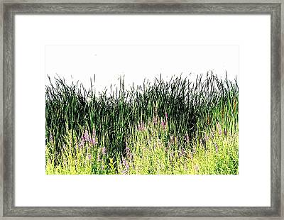 Reeds Lake Grass Framed Print by Suzanne Fenster