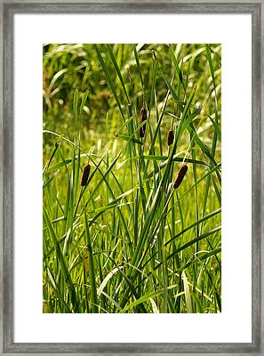 Reeds Framed Print by Margaret Steinmeyer