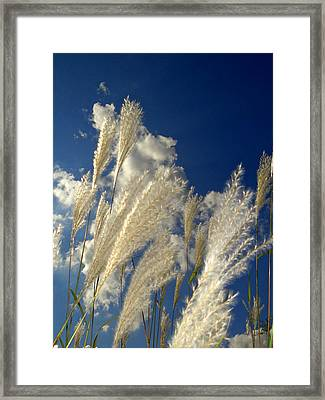 Reeds On A Sunny Day Framed Print