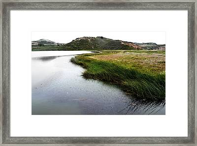 Reeds On The Water Framed Print