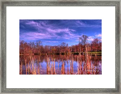 Reeds Framed Print by Paul Ward