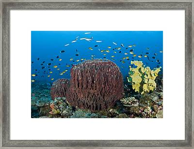 Reefscape With Sponges And Schooling Fish Framed Print