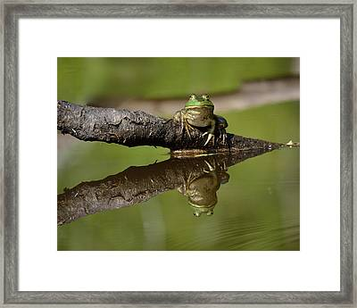 Reflecktafrog Framed Print