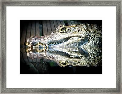 Reflect Crocodile Framed Print