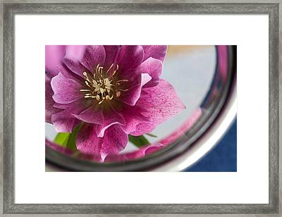Reflected Beauty Framed Print by Shirley Mitchell