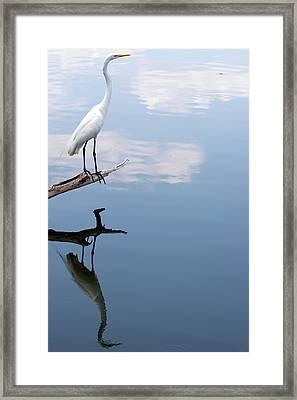 Reflecting Egret Framed Print by John Simandl