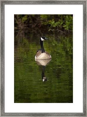 Reflecting Framed Print by Karol Livote
