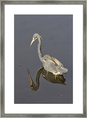 Framed Print featuring the photograph Reflection by Anne Rodkin