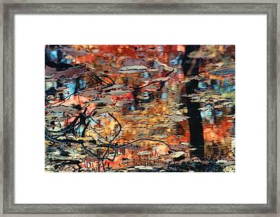 Reflection Framed Print by Barbara Middleton