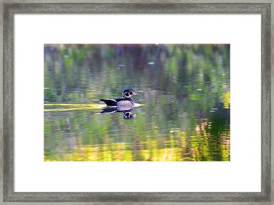 Reflection Framed Print by Bo Chambers
