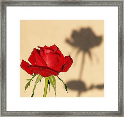 Reflection Framed Print by Cyndy Knudson