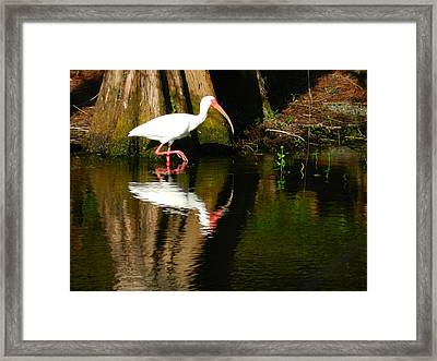 Reflection Framed Print by Don L Williams