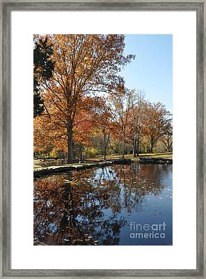 Reflection In The Water Framed Print by Denise Ellis