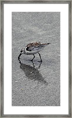 Reflection Of A Lonely Bird Framed Print