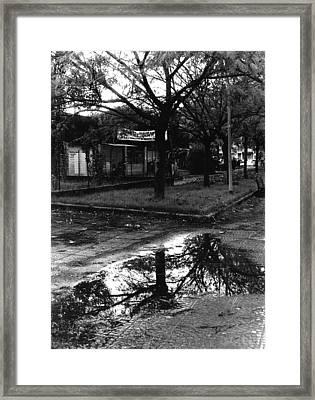 Reflection Of A Tree Framed Print by Luca Rosa