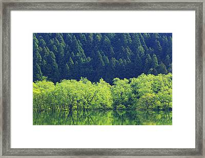 Reflection Of Forest On Water Framed Print by Imagewerks